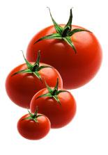 ernaehrung_tomaten